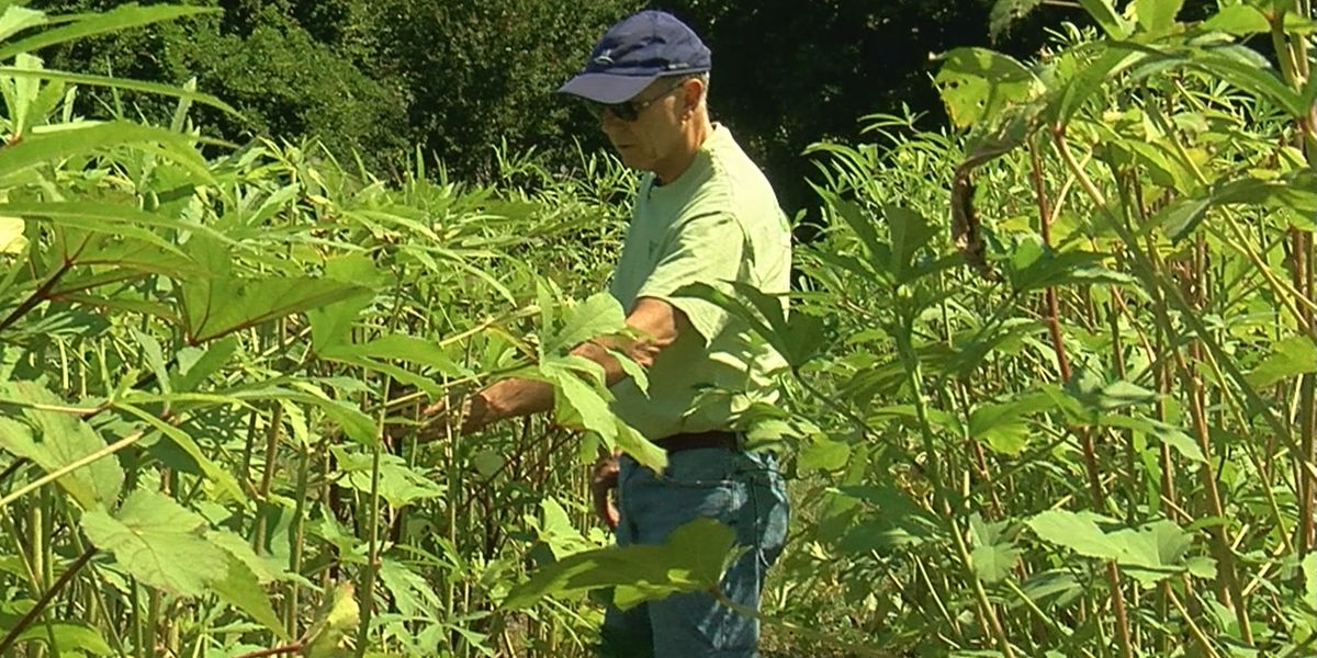 8K pounds of produce picked, given to seniors in Marshall County