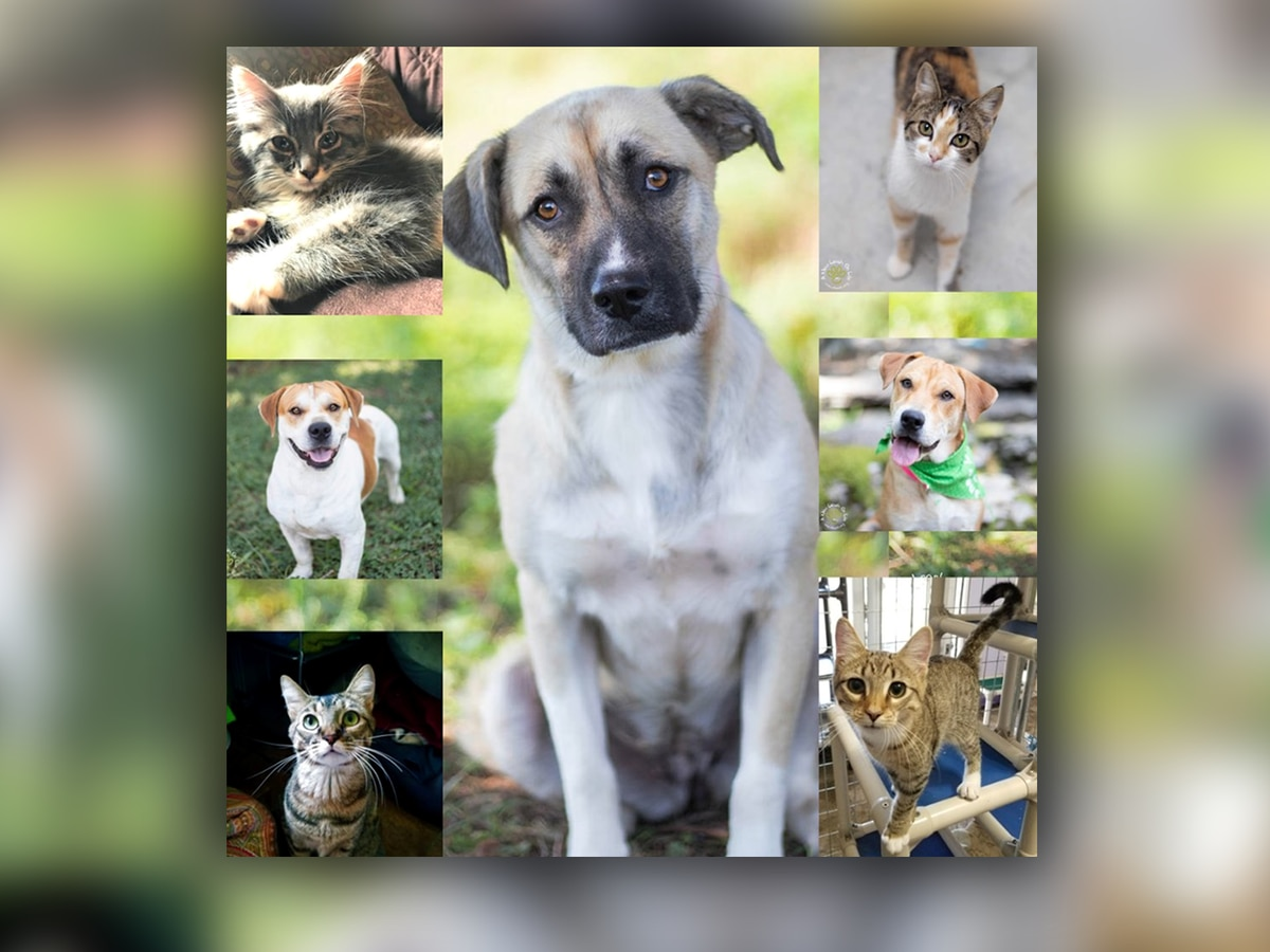 Name your own fee at Huntsville pet adoption event