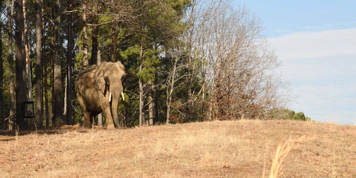 Elephant owners plead not guilty to animal cruelty charges in Lawrence County