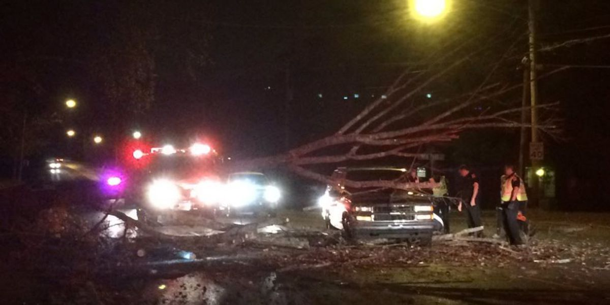Tree falls on car at Madison County intersection