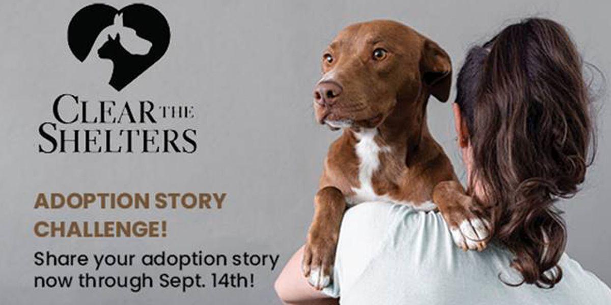 Share your pet adoption story, win big