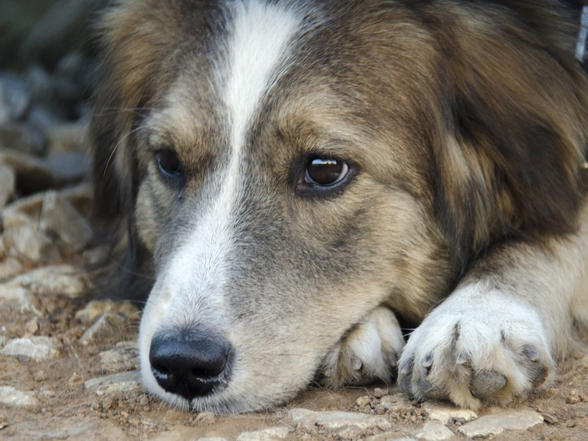 FDA warns veterinarians about opioid abuse by pet owners