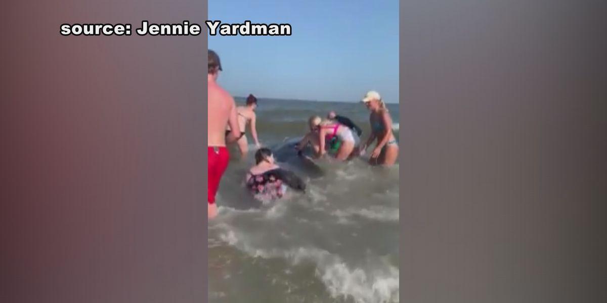 Dozens of Pilot whales come ashore on Ga. beach