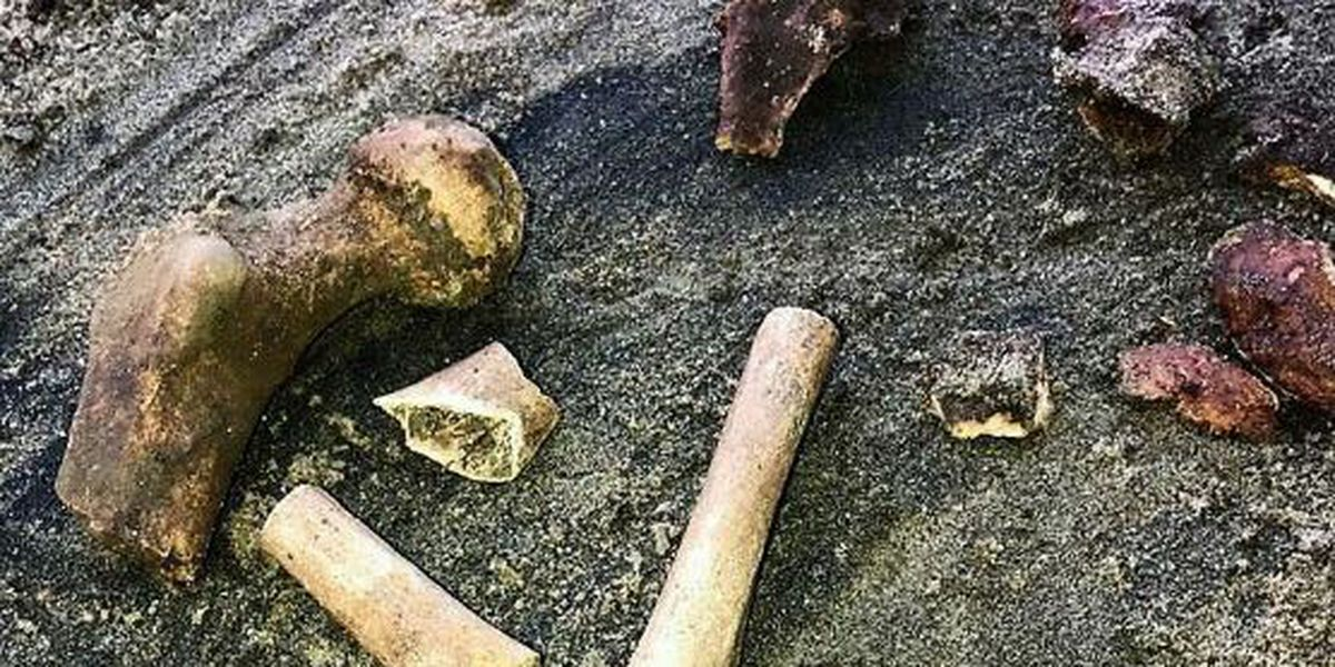 Human bones found near Priceville could be centuries old