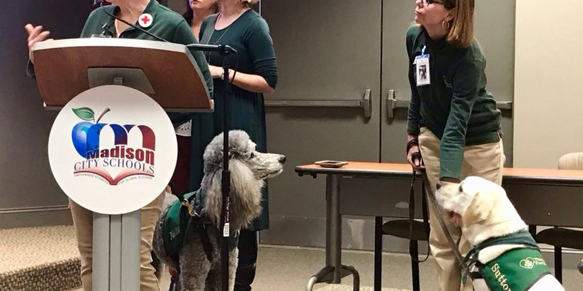 Therapy dog organization talks potential role after meeting with Madison City Schools