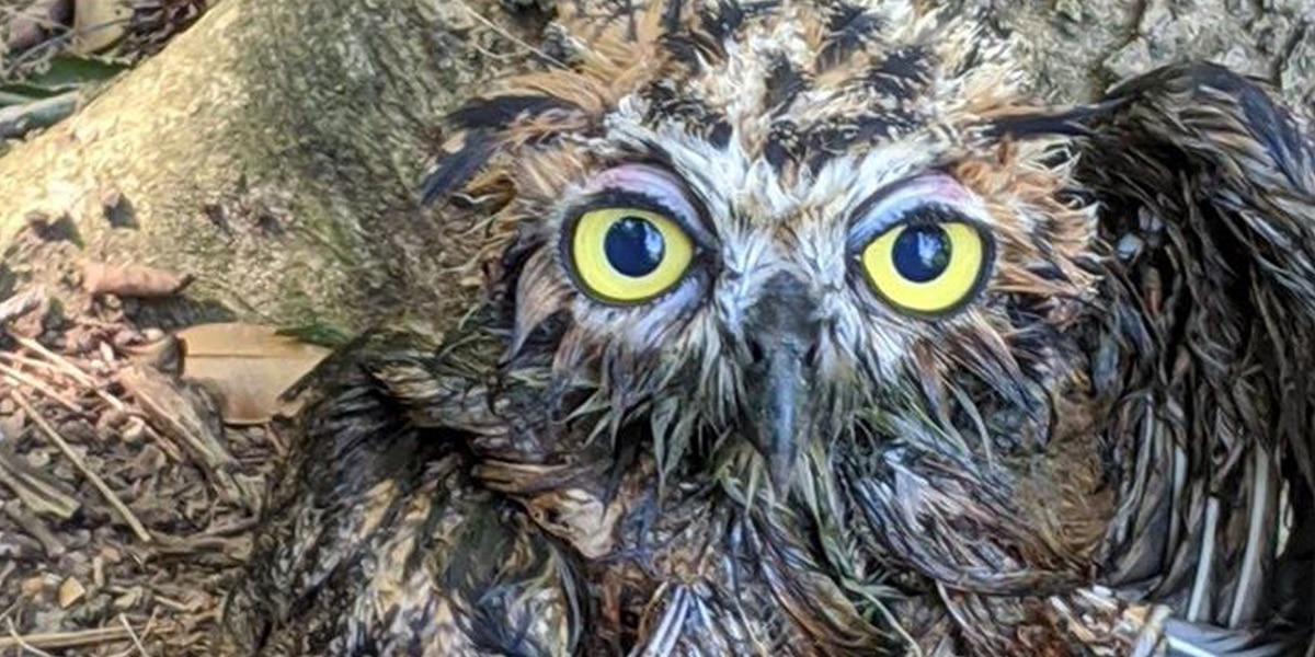 Athens city employees rescue sludge-covered owl in need of assistance