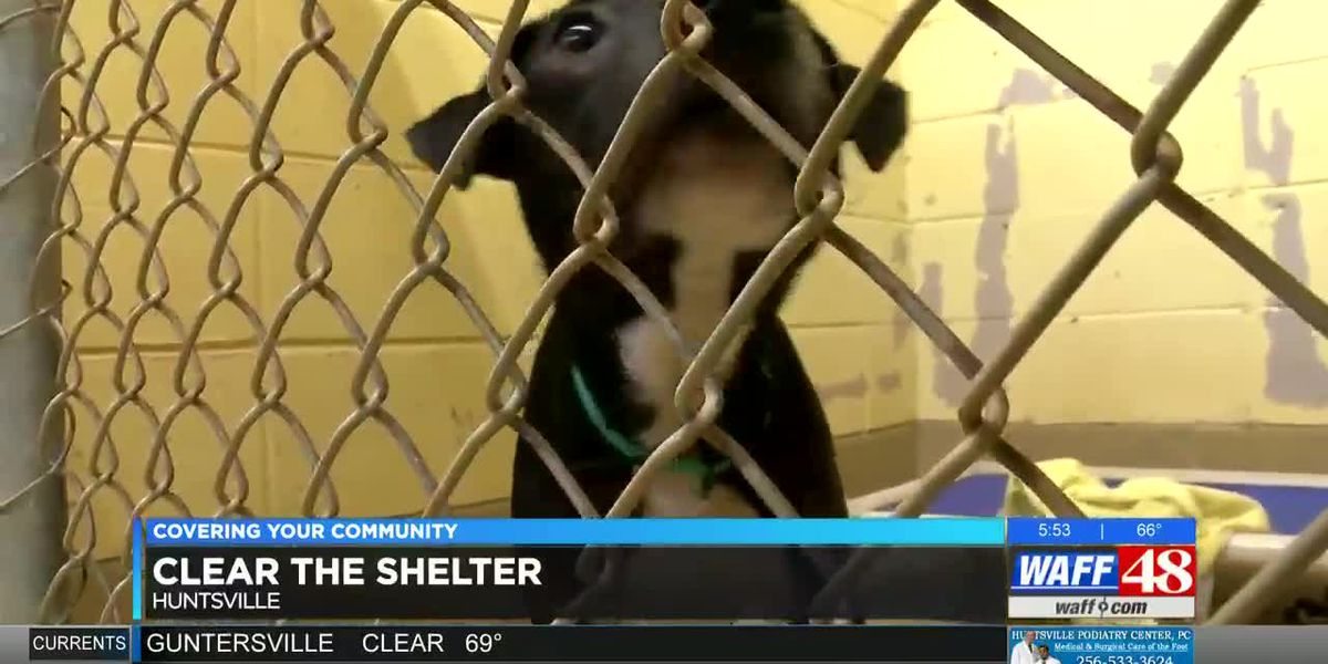 Clear the Shelters in north Alabama