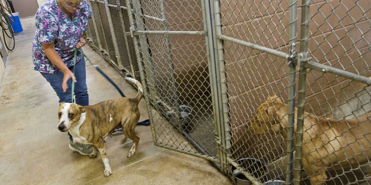 Colbert County animal shelter filled to capacity