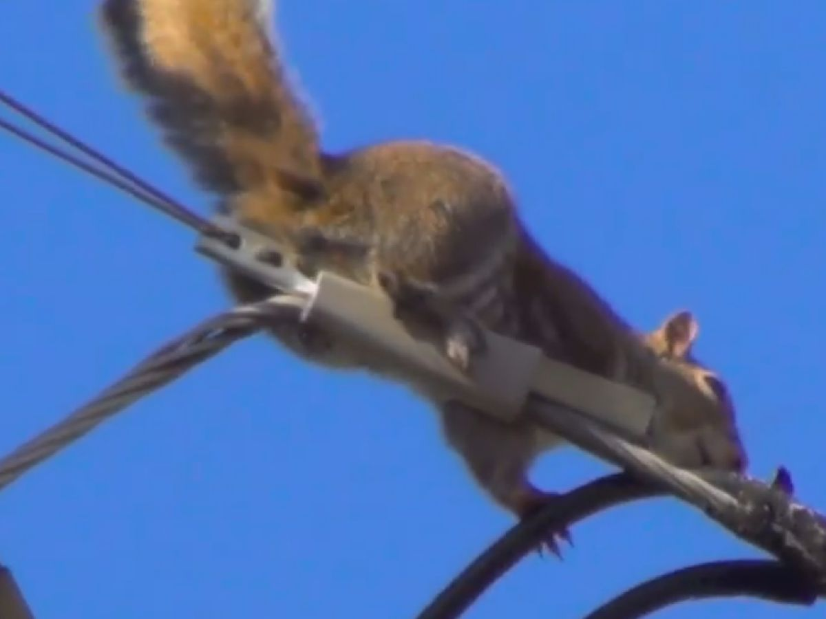 Madison County squirrels caused 260 power outages in 2018