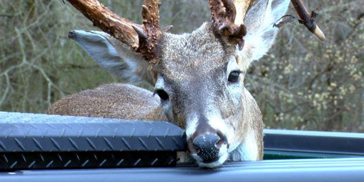 Limestone County man illegally kills record-setting buck