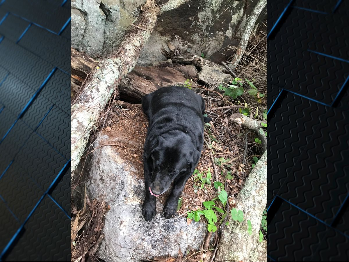 Officers rescue 100-lb dog in Jackson County