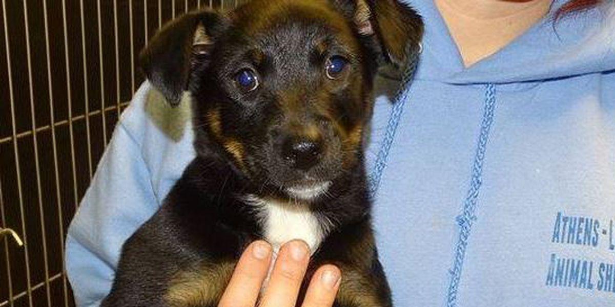 Animal shelter raising money to help abused, neglected animals