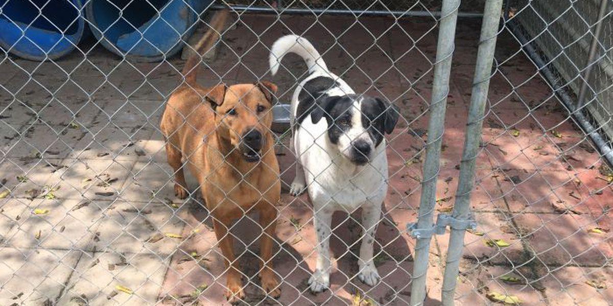 Huntsville fundraiser for pet spaying, neutering in August