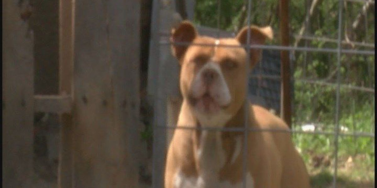 5-year-old attacked by dog north of Arab