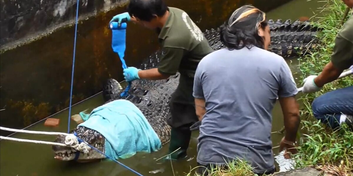 GRAPHIC: Scientist mauled to death 1,500-lb crocodile at Indonesian laboratory
