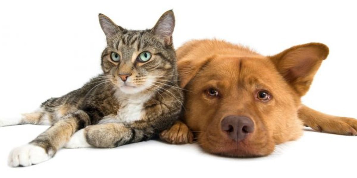 Huntsville shelter needs adopters for animals