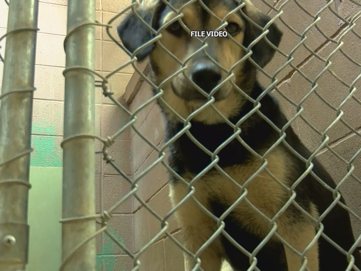 Overcrowding issues lead to euthanasia at Lawrence County animal shelter