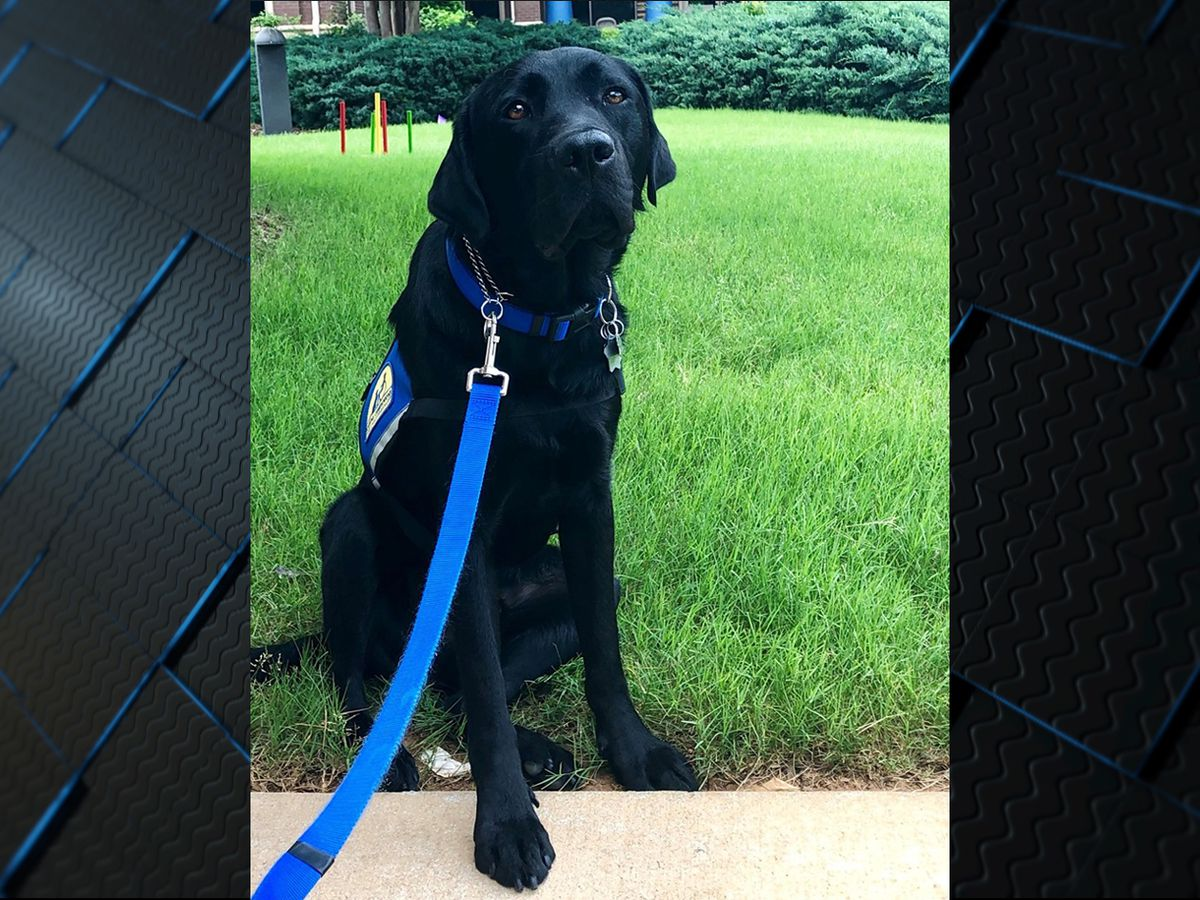 New support dog helping children at National Children's Advocacy Center