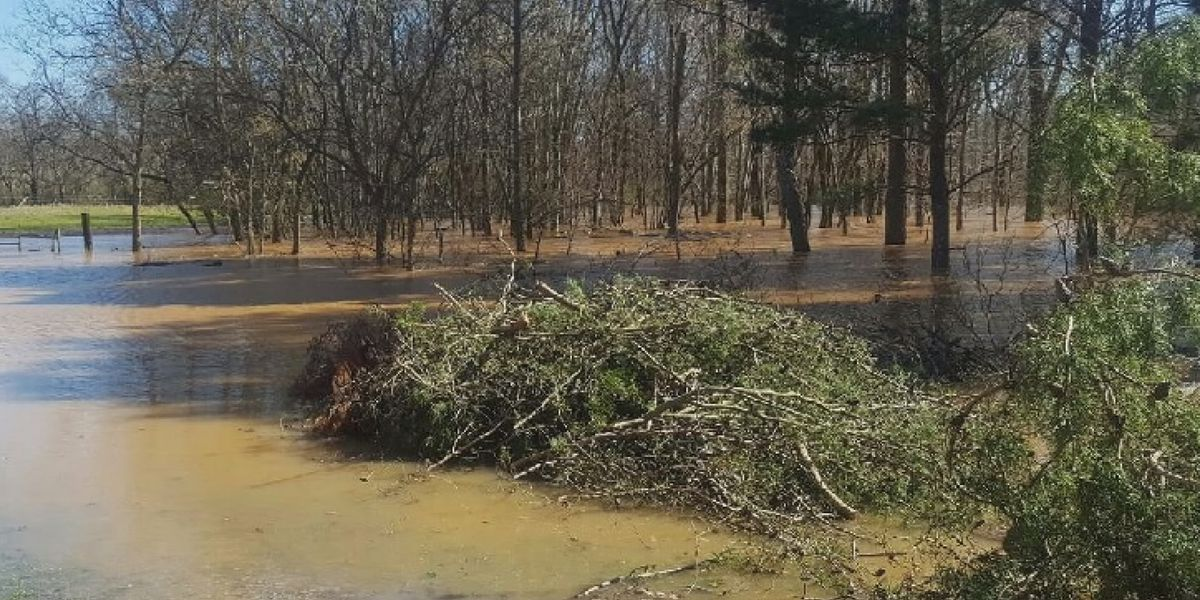 Flooding may cripple Lacey's Spring Christmas tree farm this year