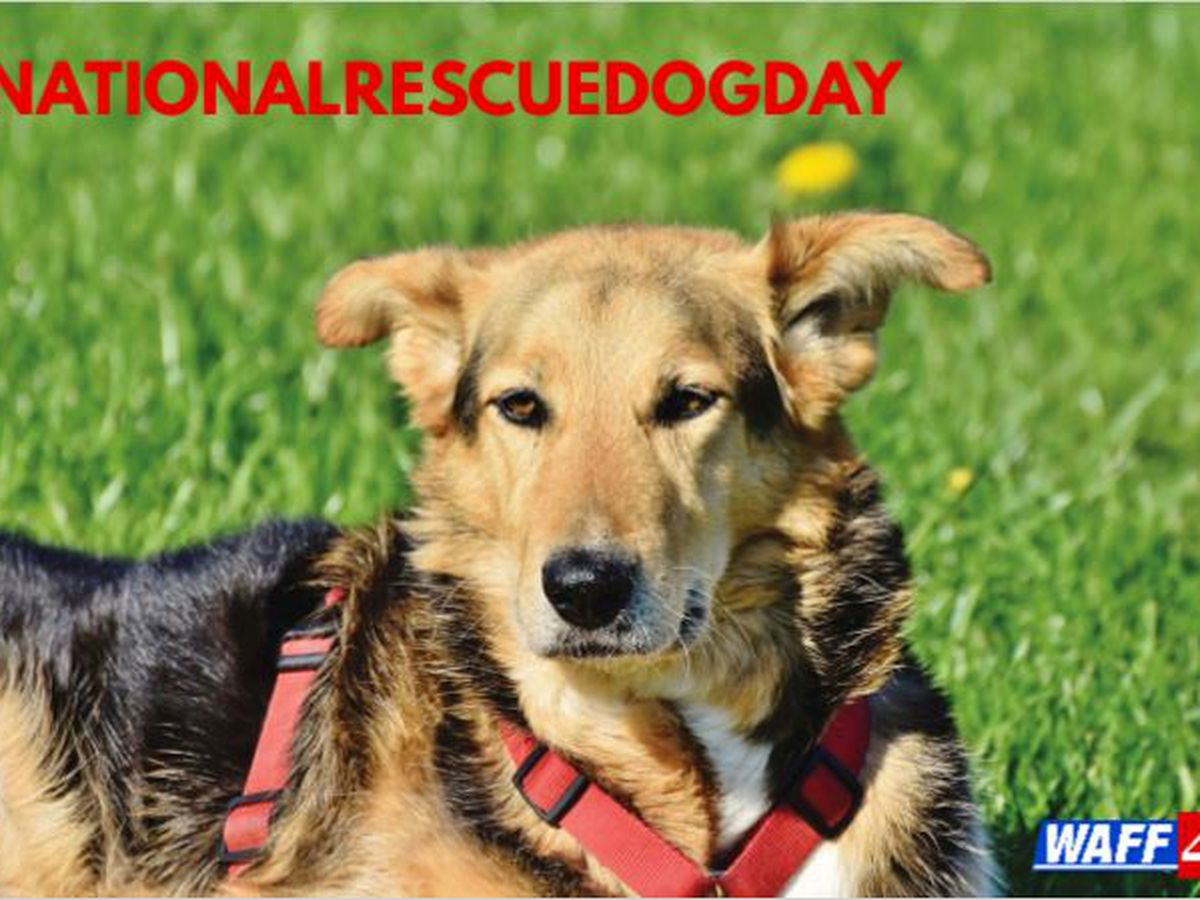It's National Rescue Dog Day!