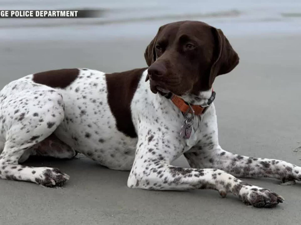 Dognapped dog back with owner after TV reporter spots suspect