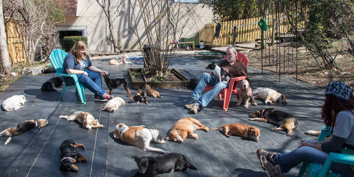 Old dogs find forever home at Tennessee sanctuary