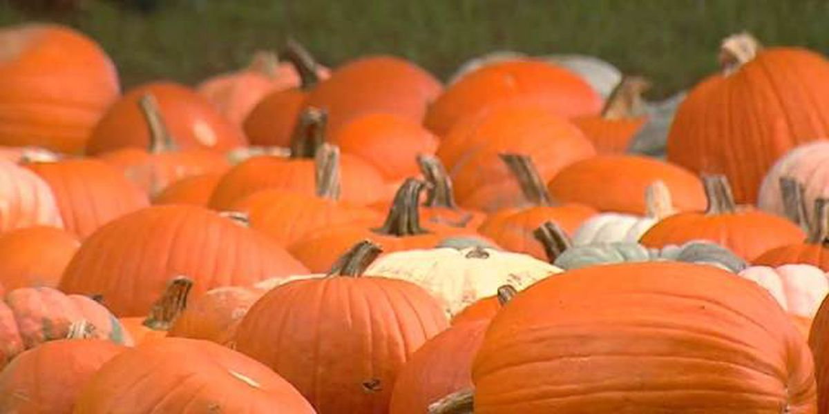 City of Decatur offers answers to frequently asked Halloween questions