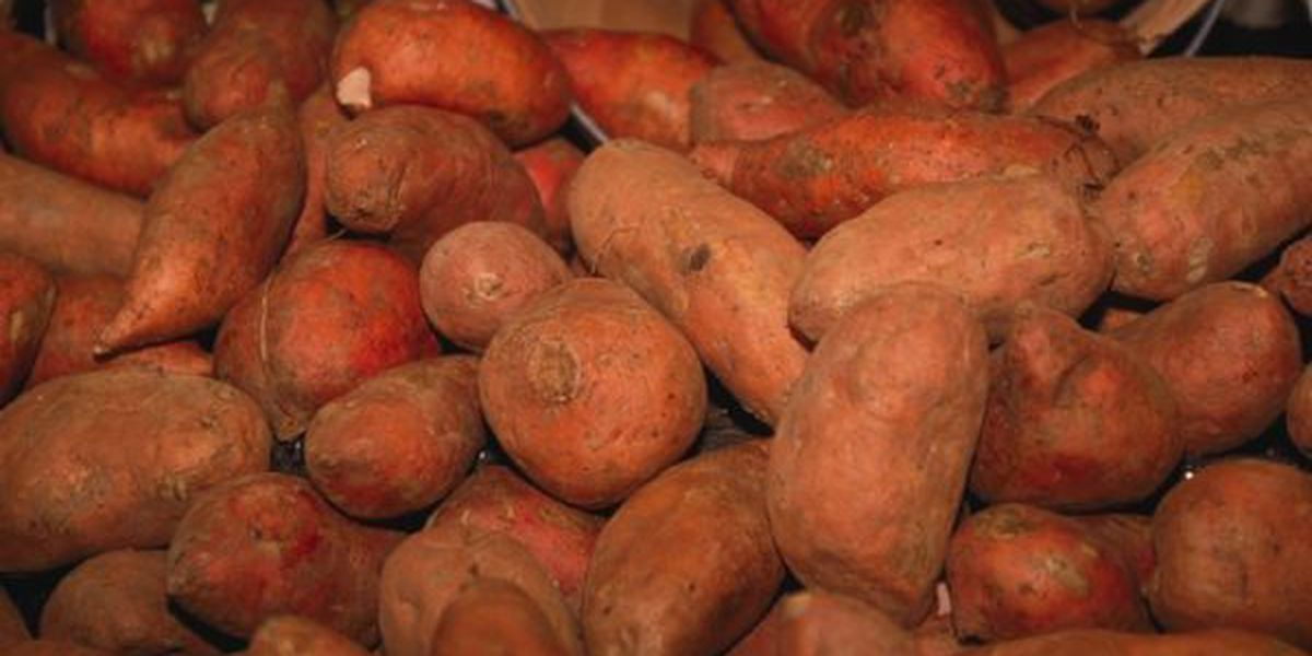The Sweet Potato Bill; Students in Alabama are working for a state vegetable to be named