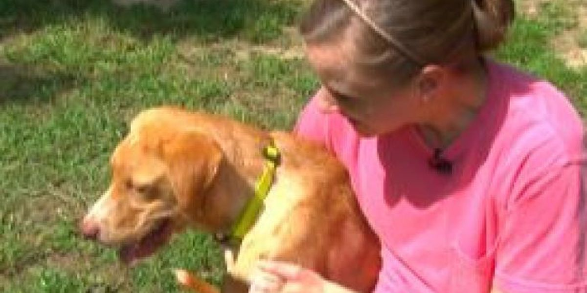Woman finds dog, believes former animal shelter director lied