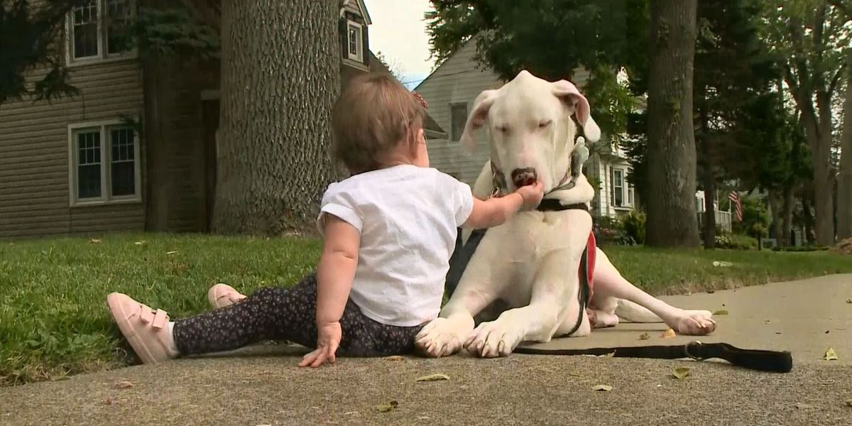 Gentle giant and little girl are inseparable