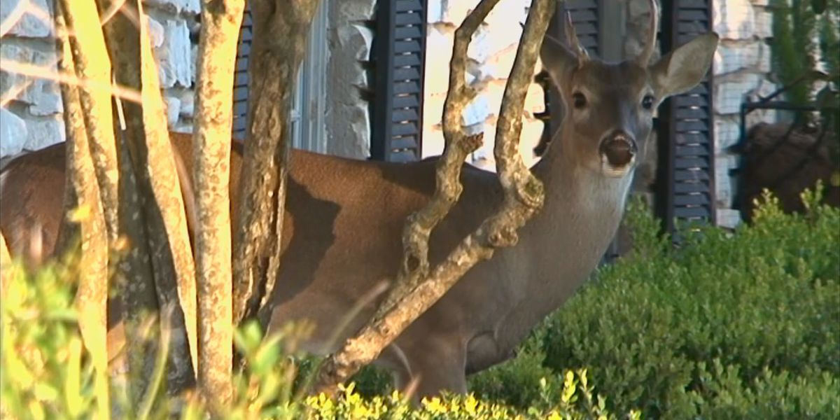 TN deer near Shoals test positive for chronic wasting disease