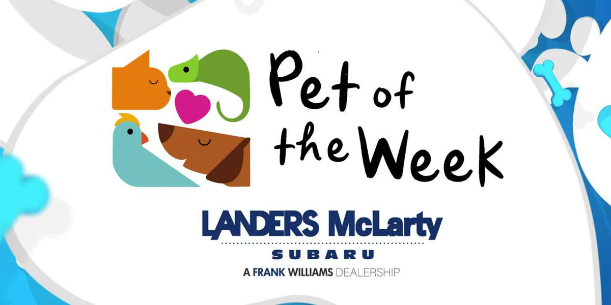 WAFF 48′s Pet of the Week: tune in every October Friday at noon