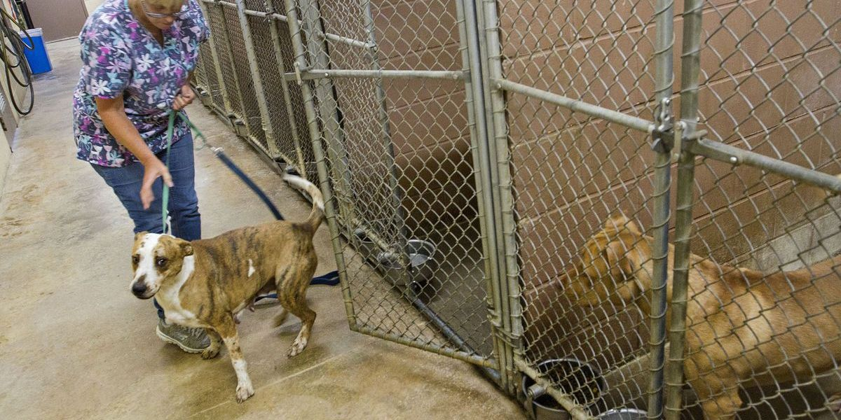The Colbert County Animal Shelter is in a budget crisis