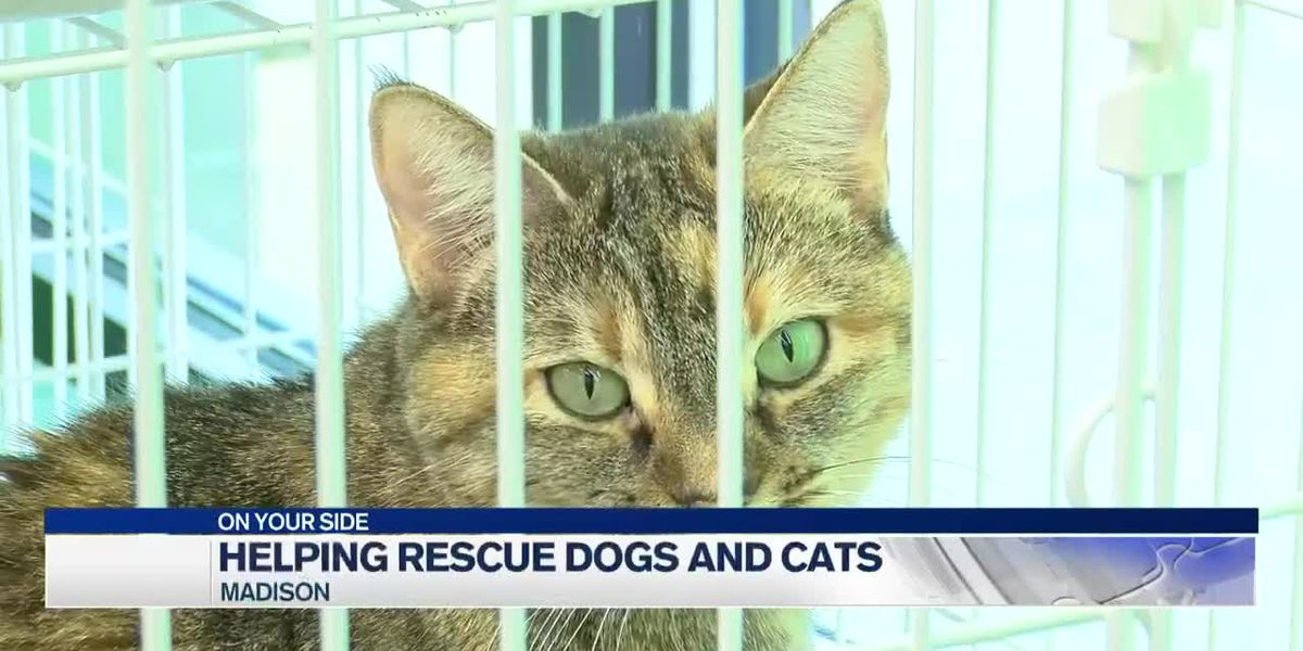 Madison city leaders working to help rescue dogs and cats