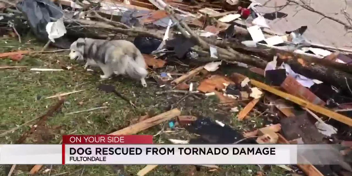 Dog rescued from tornado damage in Fultondale