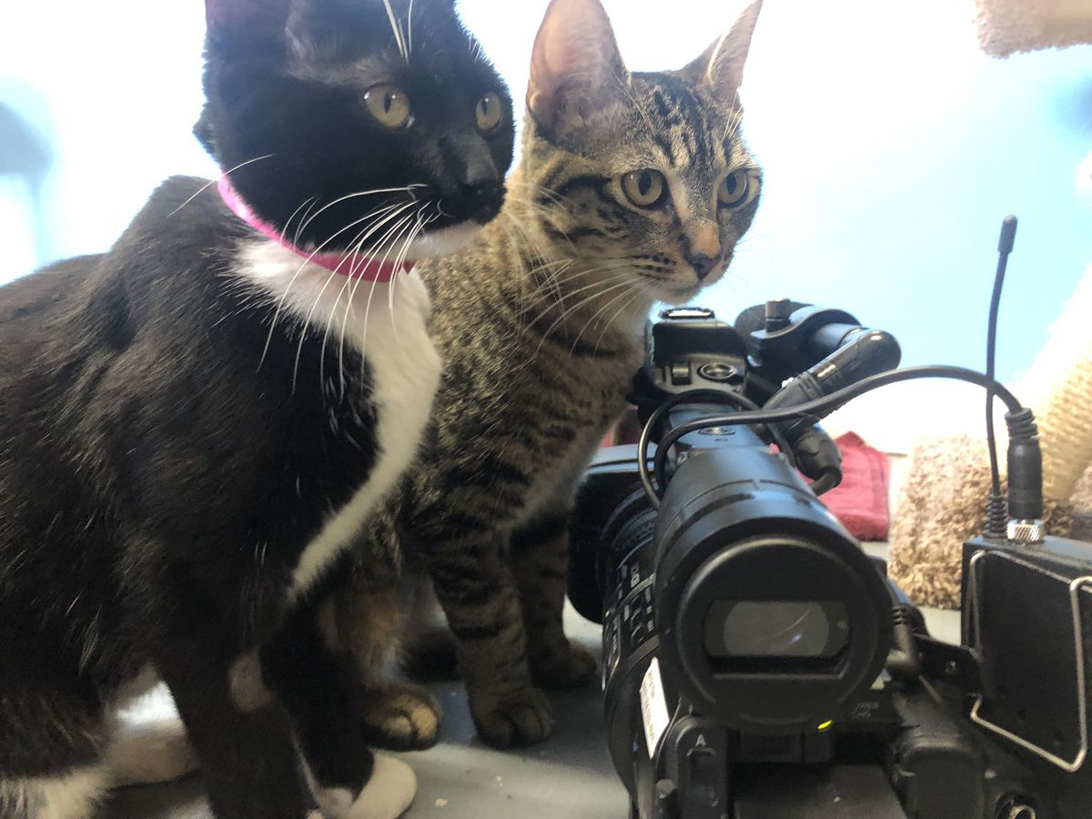 Limestone County animal shelter overflowing with cats