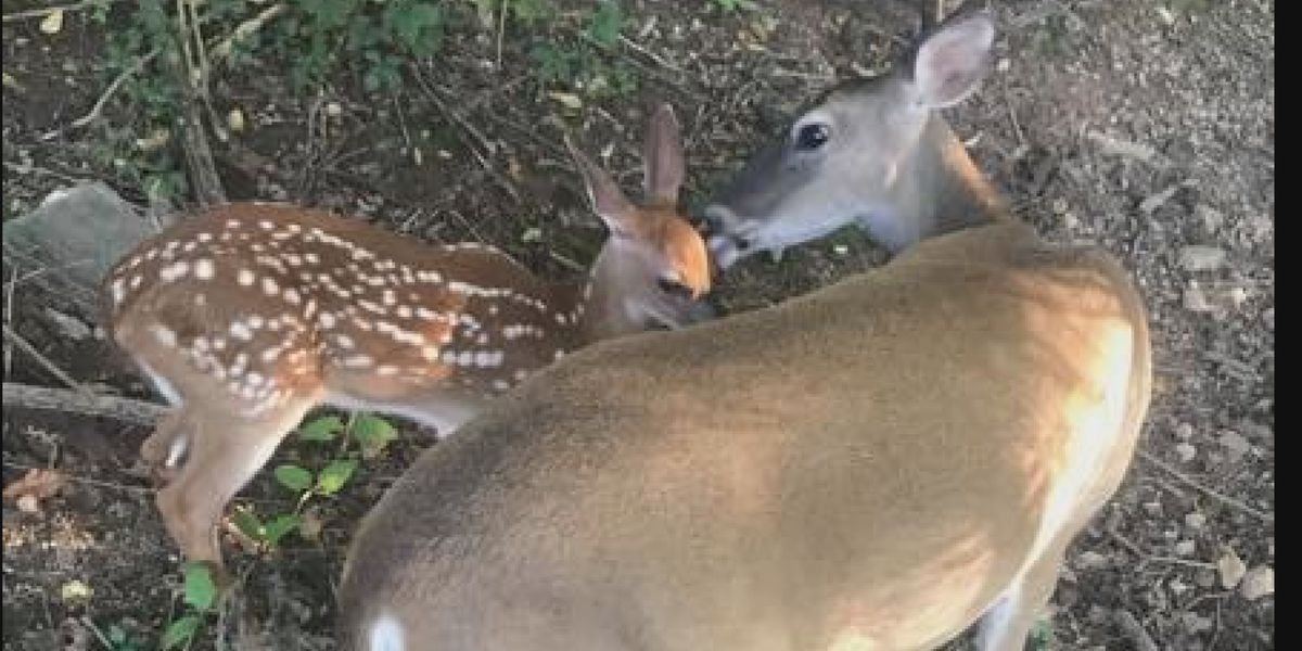 Alabama Wildlife and Freshwater Fisheries reacts to Dixie the deer shooting