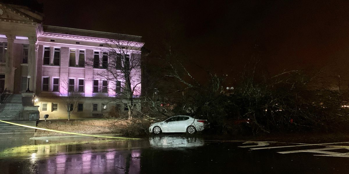 Storms topple large tree by Limestone County Courthouse