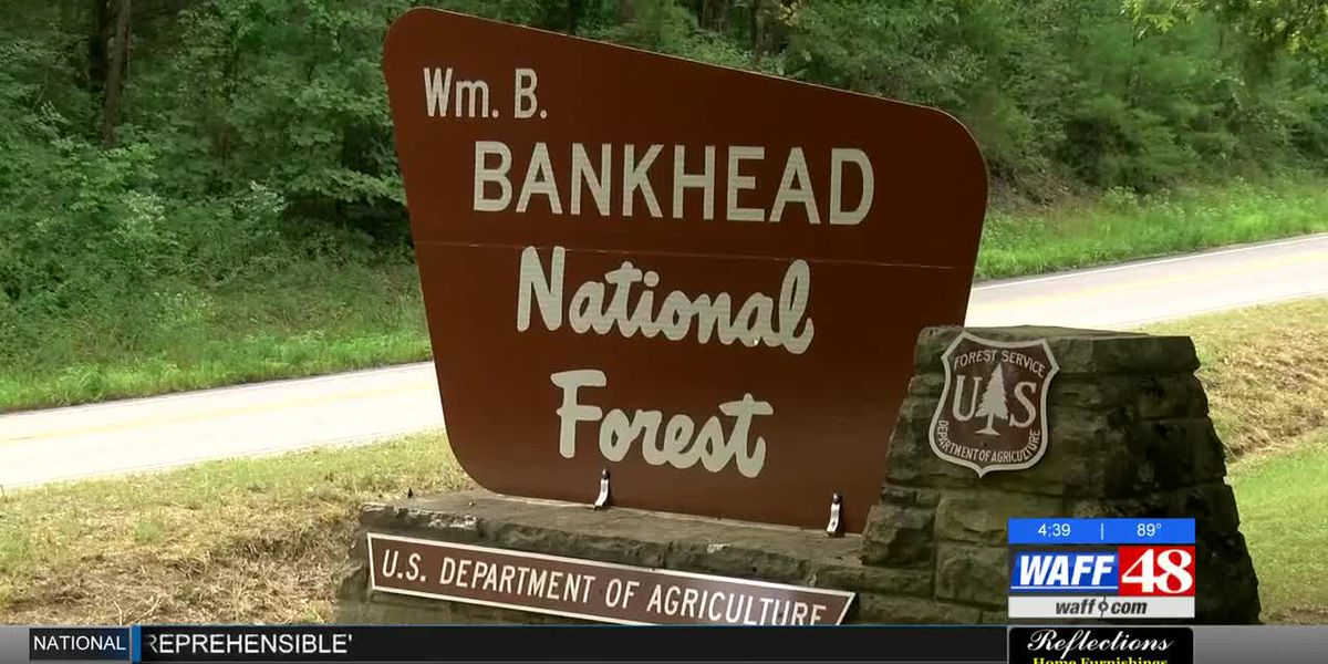 Southern pine beetle outbreak impacting AL trees