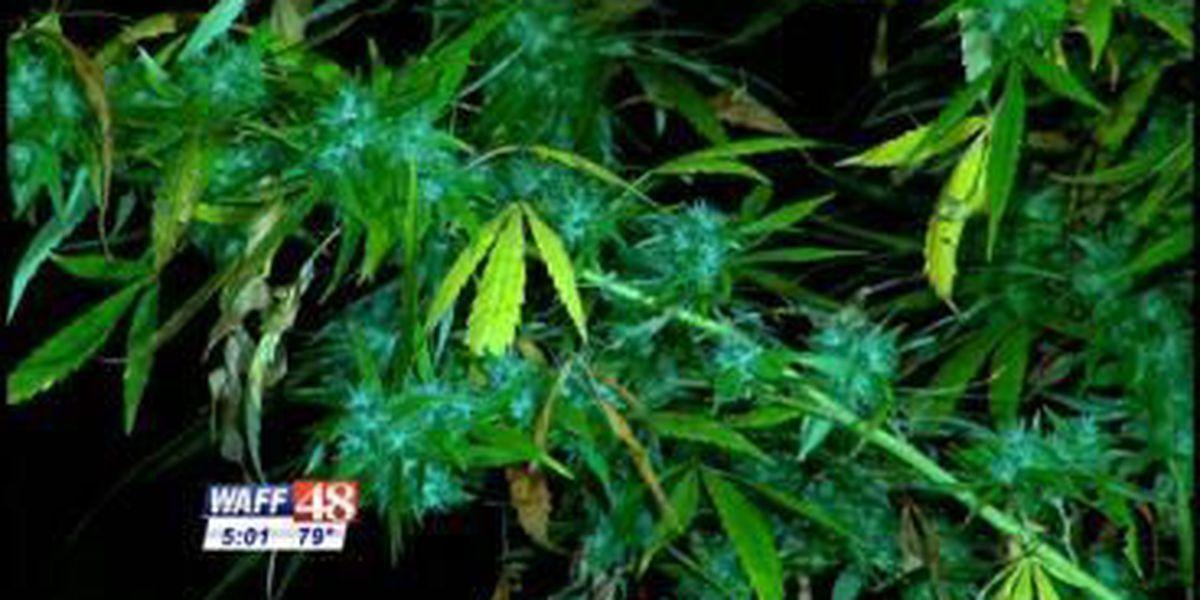 Bill for medical marijuana in AL passes Senate Judiciary Committee