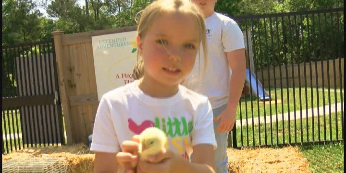 Farm Day held at Guntersville Elementary School