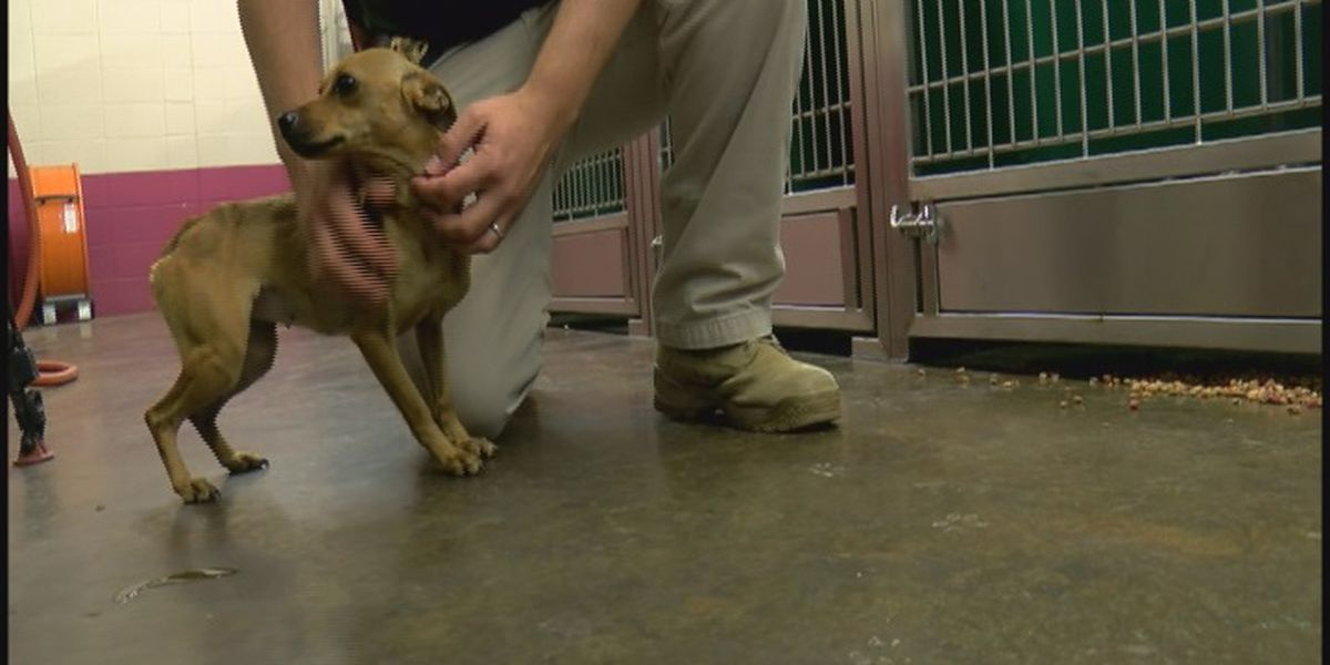 Jackson County couple arrested on animal cruelty charges