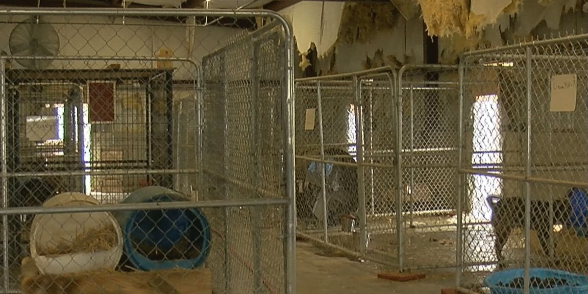 Advocates, citizens concerned about Marshall County Animal Shelter