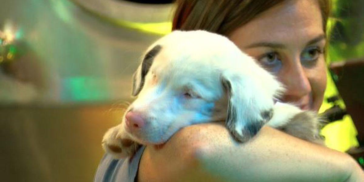 Hundreds join Toffee the puppy's thank you party
