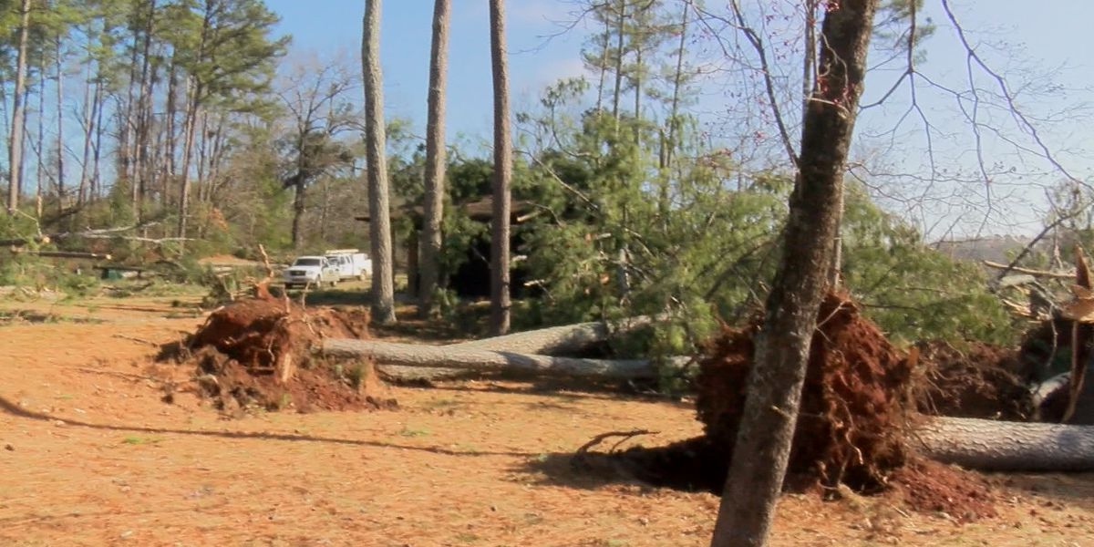 Much of Joe Wheeler State Park destroyed by storms