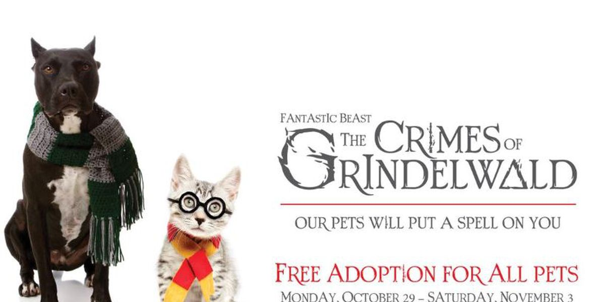 Halloween special on adoptions from Huntsville Animal Services
