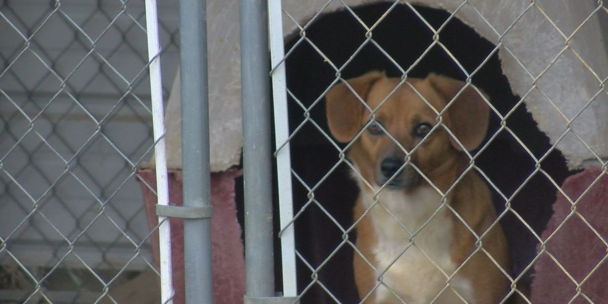 Morgan County Humane Society running out of money, facing closure
