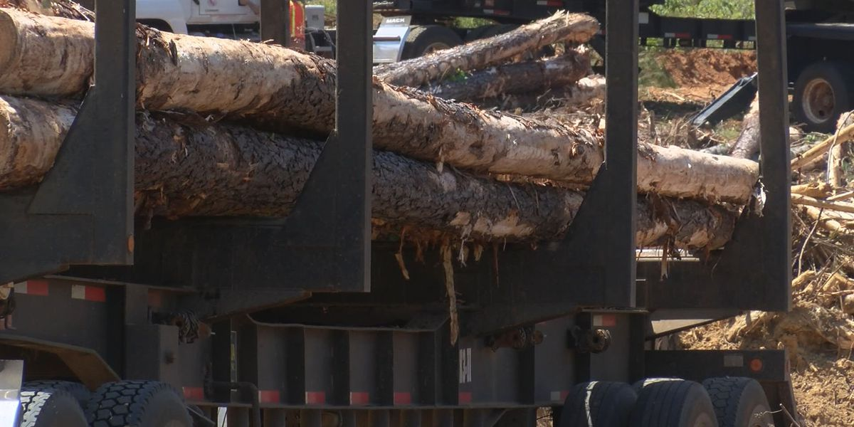 $10M from CARES Act awarded to help Ala. timber owners