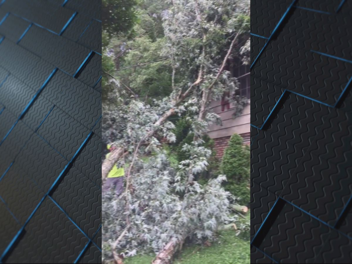 Microburst takes down tree limbs in Scottsboro