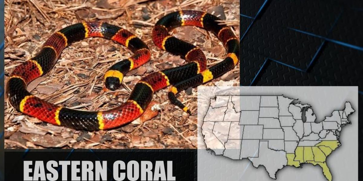 SLIDESHOW: Venomous snakes native to Alabama